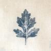 2 Shevanti Leaf