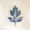 2-Shevanti-Leaf.jpg
